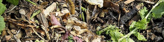 La théorie du compost en pédagogie sociale